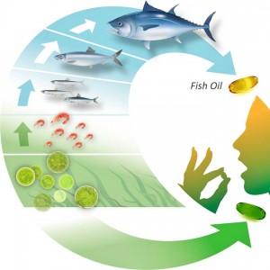 DHA si EPA surse complete de Omega 3